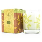 Thymes Aromatic Candle - Olive Leaf